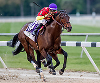 OLDSMAR, FL - MARCH 10: Quip #10, ridden by Florent Geroux wins the Tampa Bay Derby on Tampa Derby Day at Tampa Bay Downs on March 10, 2018 in Oldsmar, FL. (Photo by Scott Serio/Eclipse Sportswire/Getty Images)