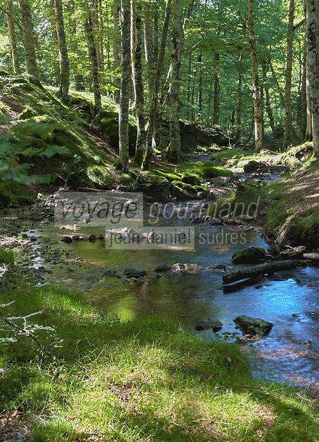 Europe/France/Aquitaine/64/Pyrénées-Atlantiques/Pays-Basque/Soule/Plateau d'Iraty: Forêt de hêtres d'Iraty