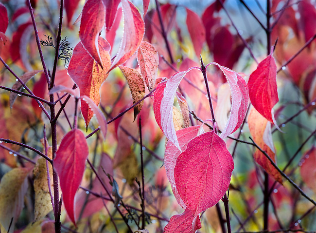 Autumn Leaves and Branch Design