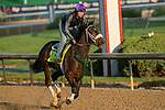 LOUISVILLE, KY - MAY 1: Bravazo, trained by D. Wayne Lukas, exercises in preparation for the Kentucky Derby at Churchill Downs on May 1, 2018 in Louisville, Kentucky. (Photo by Eric Patterson/Eclipse Sportswire/Getty Images)