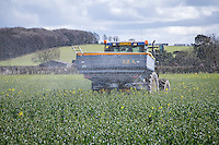 Applying nitrogen (nitram 34.5%) to oil seed rape - Norfolk, March