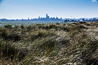 San Francisco skyline over the bay and the windblown flowing grasses of Alameda's Crown Beach.