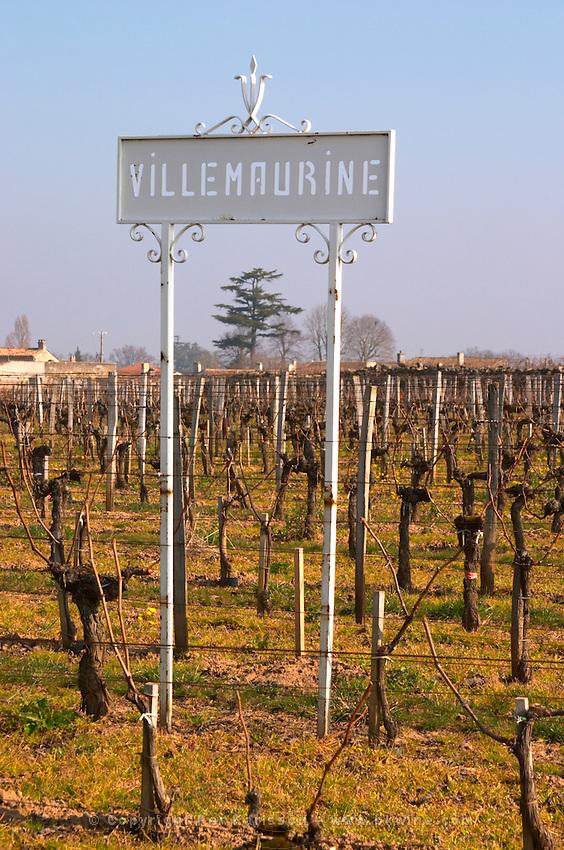 Vineyard. Chateau Villemaurine. Saint Emilion, Bordeaux, France