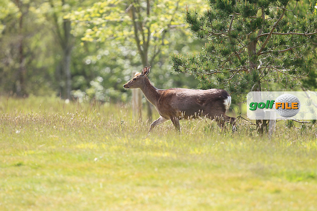 Wildlife on course during Round 1 of the Irish Women's Open Strokeplay Championship at Dun Laoghaire Golf Club on Saturday 23rd May 2015.<br /> Picture:  Thos Caffrey / www.golffile.ie
