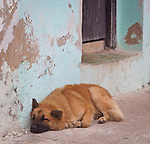 Siesta time in the fishing village of Cojimar, Cuba.