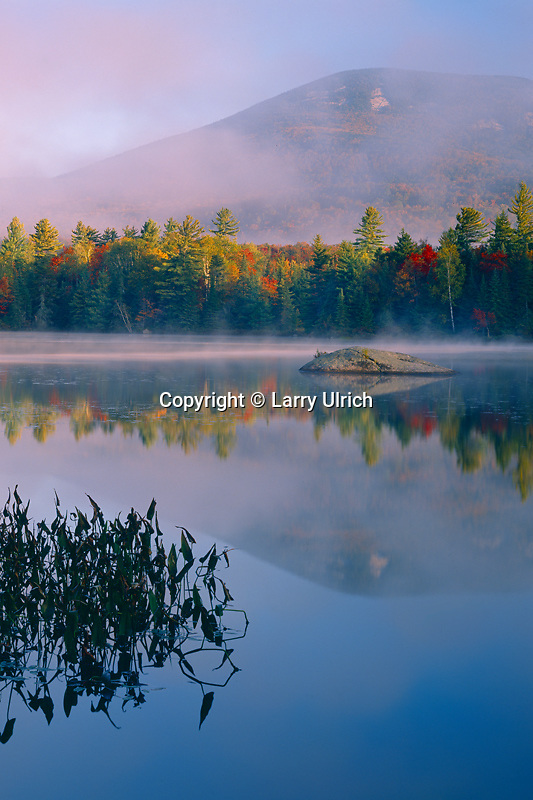 Broad-leaved arrowhead, Durant Lake<br />     and Blue Mountain<br /> Adirondack Park<br /> Adirondack Mountains, New York