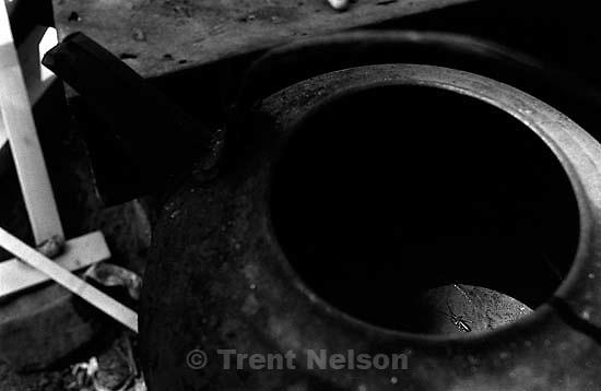 Earwig in Casey's teapot.<br />