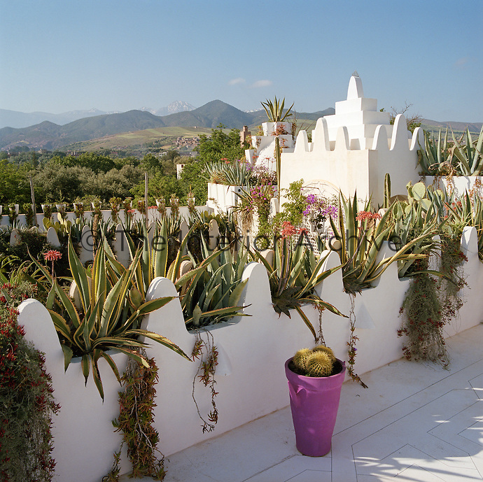 The sculptural quality of the roof top is emphasised by the agaves and succulents