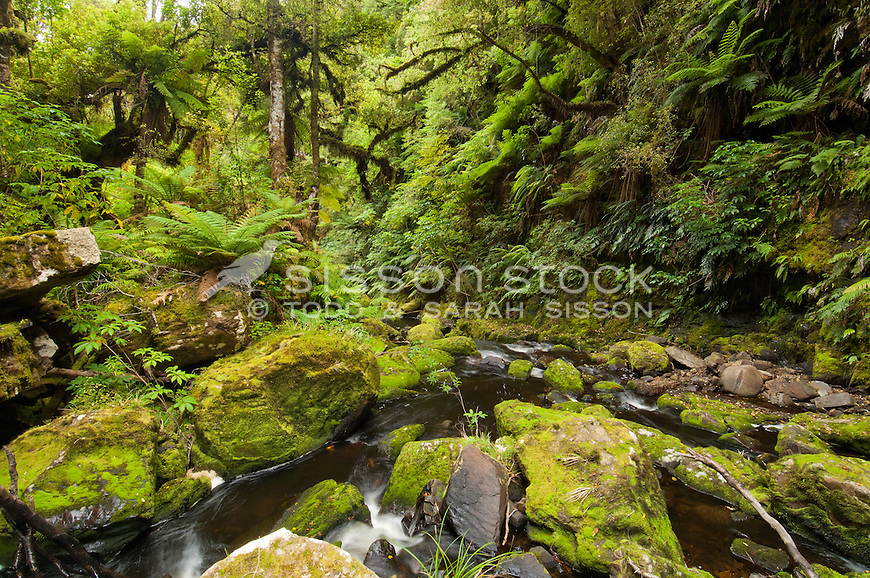 McLean Falls and native bush in the Catlins Forest Park, Coastal Otago, New Zealand