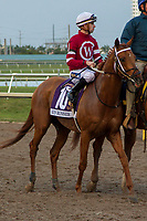 HALLANDALE BEACH, FL  JANUARY 27: #10 Gun Runner, ridden by Florent Geroux, in the post parade of the Pegasus World Cup Invitational, at Gulfstream Park Race Track on January 27, 2018,  in Hallandale Beach, Florida. (Photo by Casey Phillips/ Eclipse Sportswire/ Getty Images)