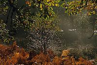 Europe/France/Limousin/Corrèze/Env de Chamberet : Campagne à l'automne