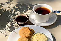 Tee mit Scones, L&uuml;hmanns Teestube, Blankeneser Landstra&szlig;e 29B, Hamburg - Blankenese, Deutschland, Europa<br /> Tea with scones, L&uuml;hmanns Teestube, Blankeneser Landstra&szlig;e 29B, Hamburg - Blankenese, Germany, Europe