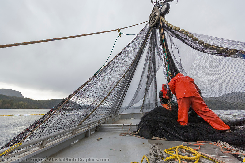 Fishermen tend to the seine net during the Sitka sac roe herring fishery in Southeast, Alaska.