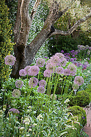 Mixed garden bed with ornamental onions (Allium rosenbachianum)