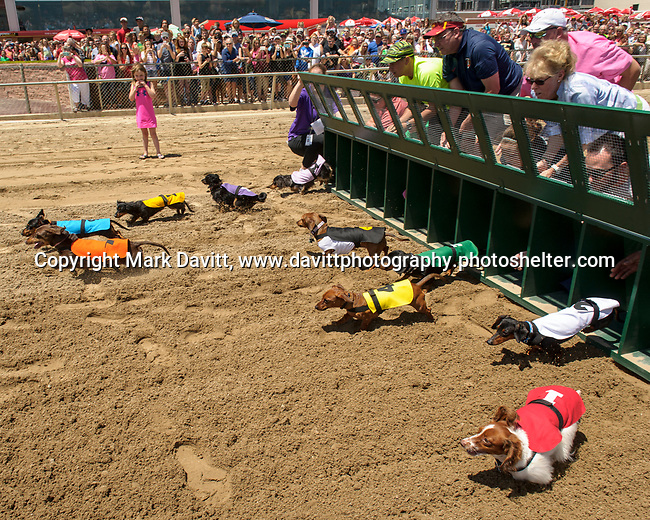 Prairie Meadows celebrated Fathers Day with its first ever first Wiener Dog Races. The four-legged competitors and their owners hit the starting gate in a 30-yard dash for cash prizes and a shot at the Wiener's Circle. And their off...