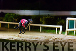 Sellout Magic winner of the John & Mary Killeacle Dowling Memorial Final at the Kingdom Greyhound Stadium on Friday
