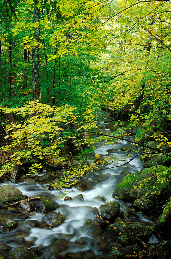 Squaw Brook flowing through autumn forest., Snowy Mountain Trail, near Indian River, Hamilton County, Adirondack State Park, N