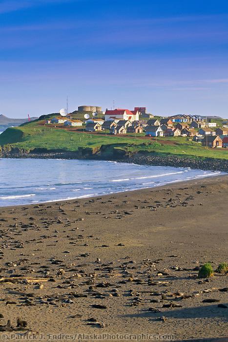 Northern Fur Seals hauled out on beach, St. Paul Island, Pribilof Islands, Alaska