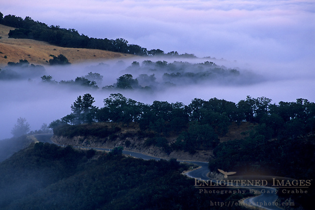 Fog, hills, trees, and road at sunrise, Cachaqua Road, above Carmel Valley, Monterey County, California