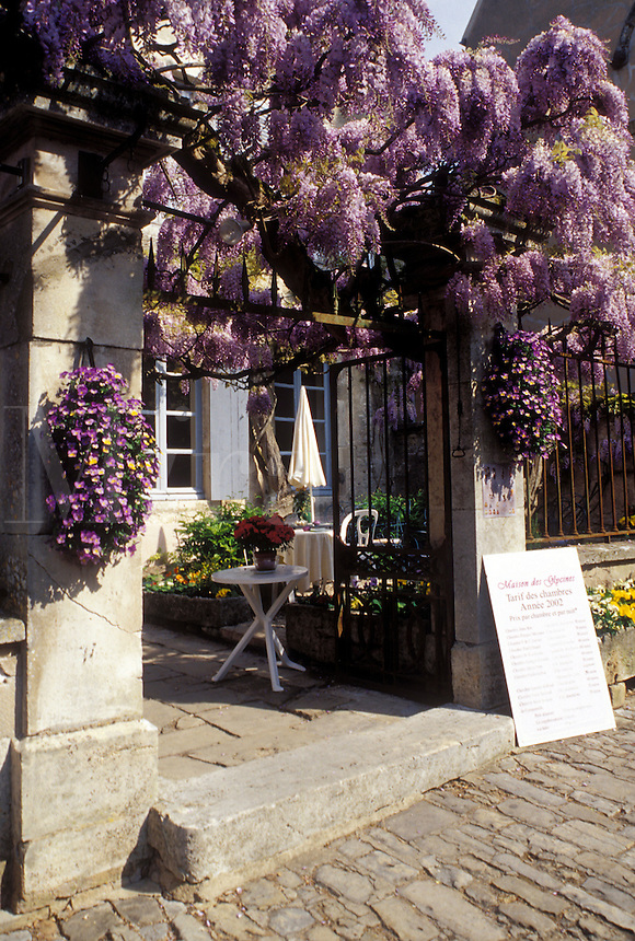 France, Veselay, Burgundy, Bourgogne, Yonne, Europe, wine region, Wisteria decorates the entrance to a restaurant in downtown Veselay.