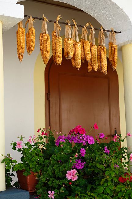 Corn drying outside a farm house at Morbish - am - see, Neusiedler See, Austria