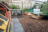 Chicken coop in rear of small backyard vegetable garden with raised beds; Jennifer Carlson garden