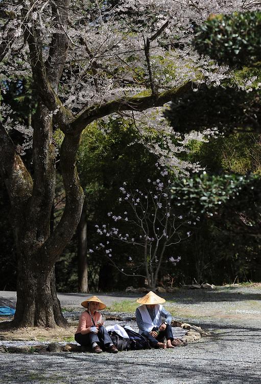 Henro pilgrims resting under a cherry blossom tree. Shikoku. Japan.