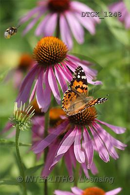 Gisela, FLOWERS, photos(DTGK1248,#F#) Blumen, flores, retrato