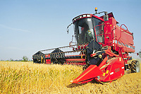 - harvester machine collects the rice in a farm....- mietitrebbiatrice raccoglie il riso in una azienda agricola