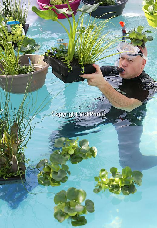 Foto: VidiPhoto <br /> <br /> ROOSENDAAL &ndash; Kweker Ronald Moerings uit Roosendaal inspecteert woensdag de wortelgroei van waterplanten in een testbassin. Het gespecialiseerde bedrijf presenteert 2.000 manden met 20 verschillende soorten waterplanten zoals waterhyacinten, gele lis, aronskelk en penningkruid in een megavijver op de Florali&euml;n. De unieke collectie waterplanten wordt &eacute;&eacute;n van de publiekstrekkers op de Florali&euml;n, de wereldexpo van bloemen en planten die van 9 tot en met 18 mei gehouden wordt in de Brabanthallen in Den Bosch. Moerings is de grootste waterplantenkweker van Europa, met een productie van 8 miljoen planten.