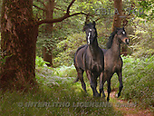 Bob, ANIMALS, collage, horses, photos(GBLA760,#A#) Pferde, caballos