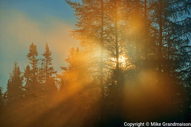 Morning light in the boreal forest<br />