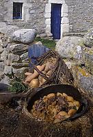Europe/France/Bretagne/29/Finistère/Ile d'Ouessant : Ragoût d'agneau de pré-salé dans les mottes de terre sèche