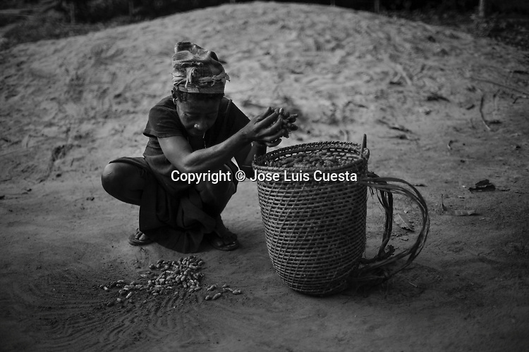 Woman of the pygmy tribe Baka collecting peanuts. The Baka live in the jungle near Dja river beside to the Congo border, they are Nomadic Hunter-gatherers and one of the oldest human groups in the world.