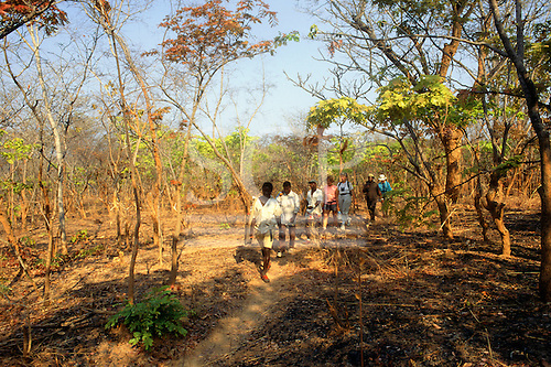 Zambia, Africa. Tourist safari group trekking on foot with park ranger guide.