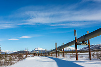 Trans Alaska oil pipeline traverses the tundra in Alaska's Arctic.
