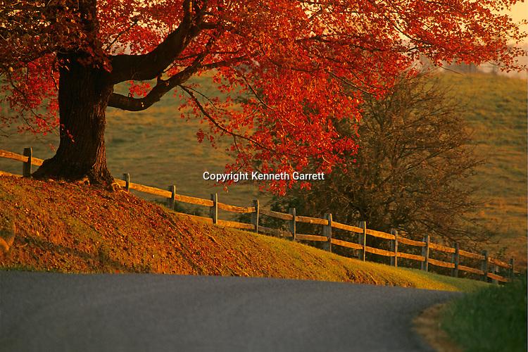 Fauquier County; VA; scenic; road; farmland; foliage