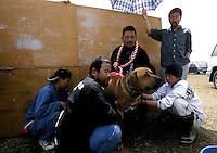 Some owners and their dog wait at a specially constructed area prior to the dog fighting in Nagasaki, Japan. The dogs must be calm and silent for at least 15 minutes before a fight or they may be disqualified..