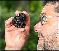 BNPS.co.uk (01202 558833)<br /> Pic: PhilYeomans/BNPS<br /> <br /> Black gold....<br /> <br /> A lucky gardener is thought to have become the first person in Britain to stumble upon an abundant source of the prized black truffle - also known as 'chef's gold'. <br /> <br /> Sharp eyed Steve Fletcher (60) was digging around an oak tree at a secret location near Dawlish in Devon, when he discovered a potential goldmine of the edible fungi.<br /> <br /> The elusive ingredient is normally only found in wooded areas of France, Italy and Spain, and it's rarity, flavour and aroma make it extremely valuable, with prices reaching &pound;2000 a kilogram.<br /> <br /> Mr Fletcher is now keeping the exact location of his untapped source top secret to avoid any opportunistic foragers.  <br /> <br /> After his find he was unsure what to do so opened his Michelin Guide and contacted his nearest upmarket restaurant - Ode in Shaldon run by head chef Tim Bouget.