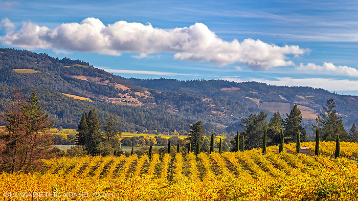 Autumn Vista, Napa Valley