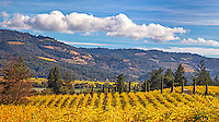 Autumn Vista, Napa Valley