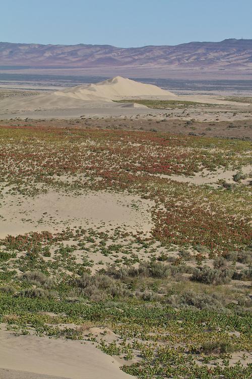 Hanford Reach National Monument, Wahluke Slope, sand dunes, Columbia Basin, eastern Washington, Washington State, Pacific Northwest, USA, North America,