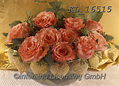 Interlitho-Helga, FLOWERS, BLUMEN, FLORES, photos+++++,orange roses,KL16515,#f#, EVERYDAY