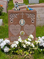 Gravestone for the bird Tweety and dog Virgo at the Hartsdale Pet Cemetery in Hartsdale NY