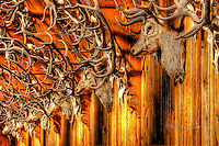 The Stag Ball room at Mar Lodge near Braemar, Royal Deeside is decorated with hundreds of stag heads www.dsider.co.uk dSider online magazine,whats on guide Braemar Royal Deeside. photography by Bill Bagshaw courses