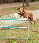Guides Canins Thur_Jeudi 21 May