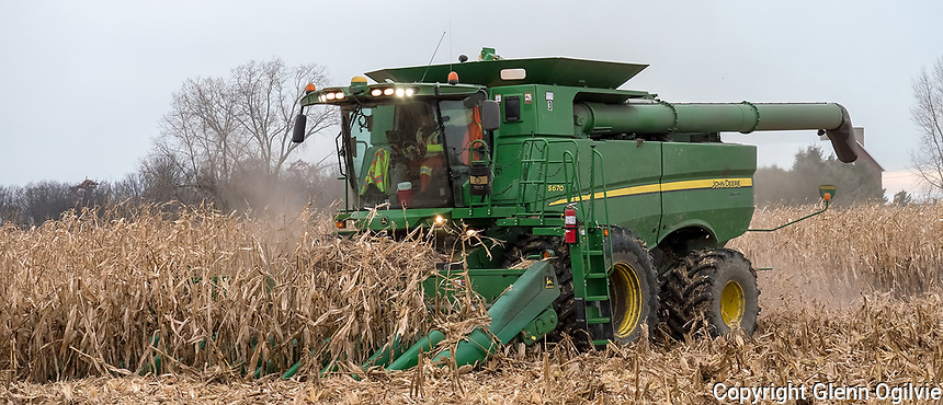 The corn harvest along Kimball Road at a Parkland Farms field.
