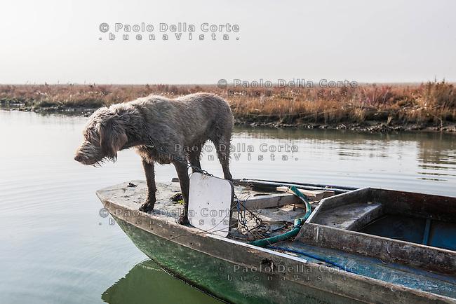 Venezia - incontri tra le barene<br /> Venice - Meeting in lagoon