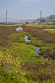 Ballona Wetlands, Playa Del Rey, Los Angeles, California, USA