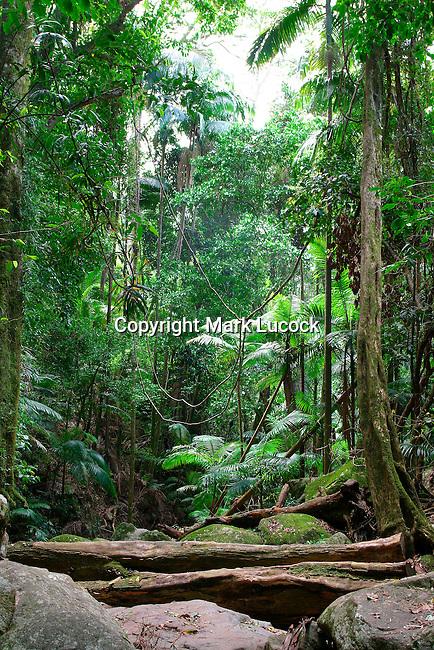 Mt Warning National Park, NSW